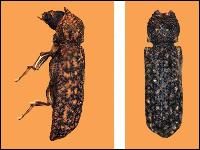 Powder Post Beetle Control CT