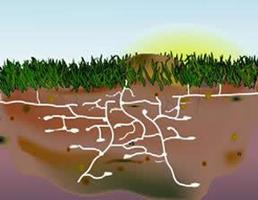 Termites Feed Control CT