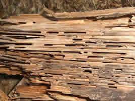 Termite Swarm Pest Control CT